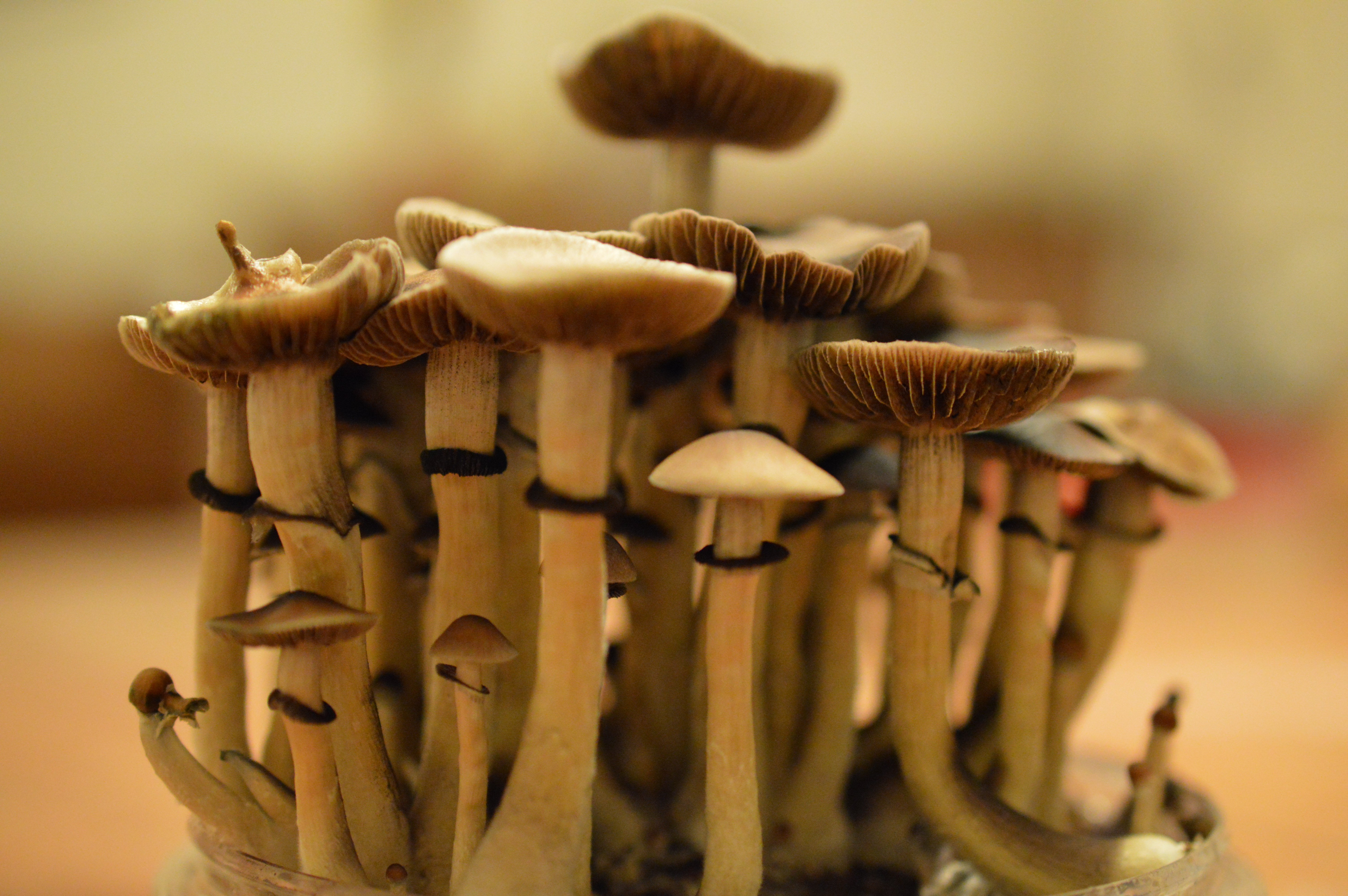 Mushroom Dosage: From Microdosing to Heroic Doses