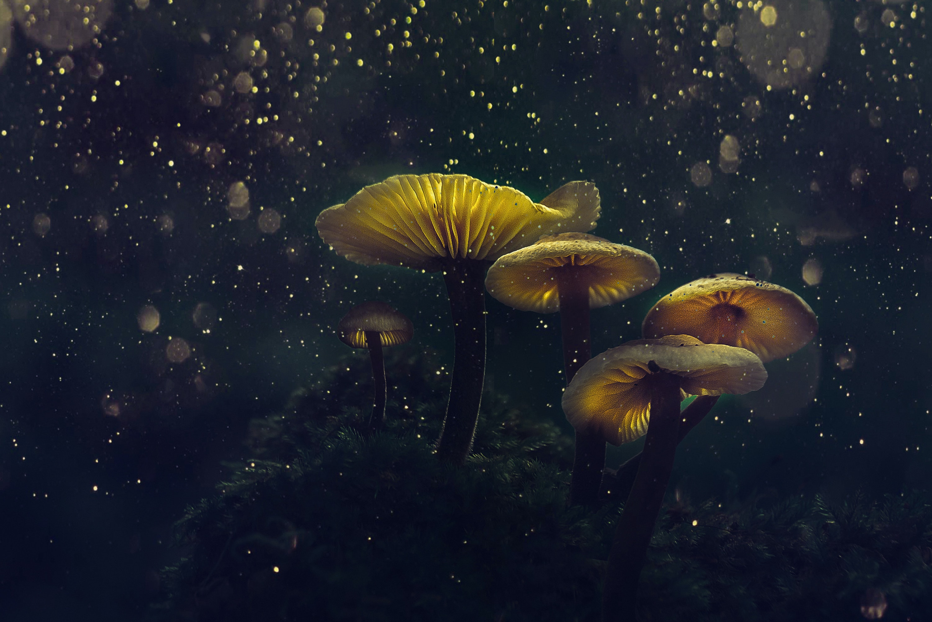 Psychedelic Mushrooms: The Comprehensive Guide (Effects, Research, & History)